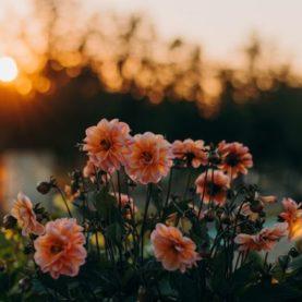 Ofrendas Florales