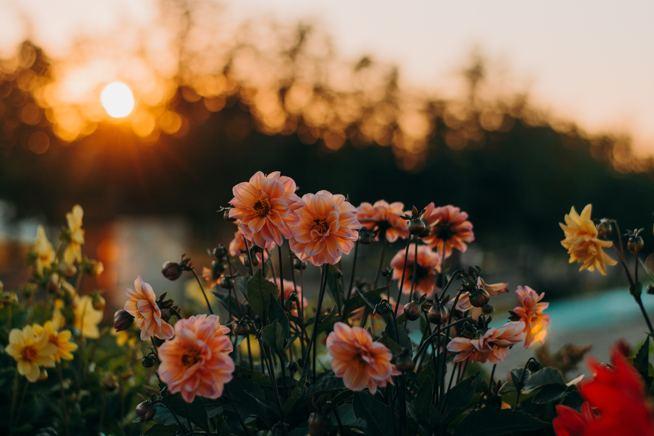 Ofrenes Florals
